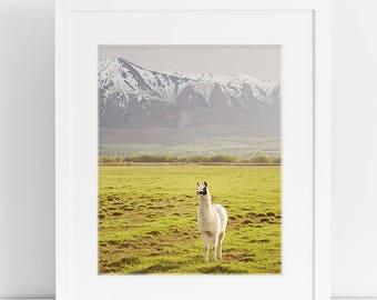 Color llama Photograph, Vertical animal art, mountain landscape photography, PHYSICAL PRINT