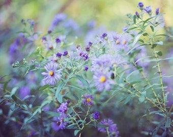 Purple Flowers - Fine Art Photograph, Purple, Flowers, Garden, Spring, Nature