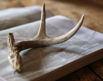 Real 3-Point Deer Antler / Natural Rustic Urban Farmhouse Home Decor