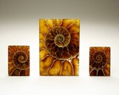 Rectangle Ammonite Fossil Designer Cabochon Set