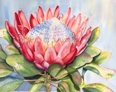 "Watercolor Print ""Protea"" by Sandi McGuire"