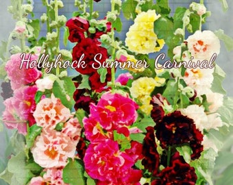 Hollyhock Summer Carnival Flower Seeds