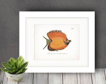 Fish of the Coral Reefs Illustration - Natural History Wall Decor Print 10 x 8  Bright Coral
