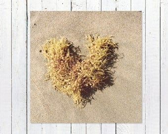 Seaweed Print | Coastal Beach Decor Print | Rustic Nautical Wall Art Print | Ocean Wall Art | Beach Photography | Seaweed Heart Art Print
