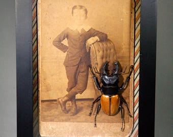 A Boy and His Beetle ~ Framed Entomology Display