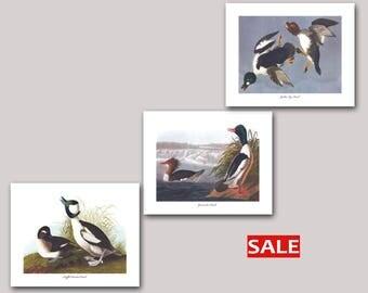 Duck Wall Art Set of 3, Buffel Headed Duck Art, Goosander Duck Art, Golden Eye Duck Art (Audubon Sea Ducks Prints, Bird Decor) SALE