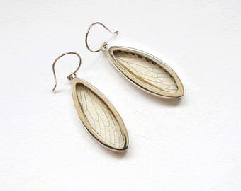 Real cicada earrings Insect jewelry Cicada jewelry Gift for women Cicada earrings Nature jewelry Cicada wings Biology gifts Bug jewelry