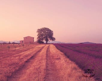 provence photography print, landscape photo, purple wall art, home decor, french style, travel, fine art photography, lavender, whimsical