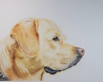 Golden Labrador Original Drawing A3