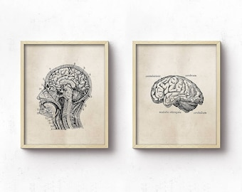 Anatomy PRINTABLE Art Prints - Human Anatomy - Office Decor - Science - Head - Brain - Set Of Two - Light Brown - Medical Student Gift
