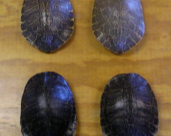 4 Large River Cooter Turtle Shells