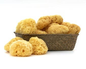 Sea Sponge ~ Natural Yellow Sea Wool