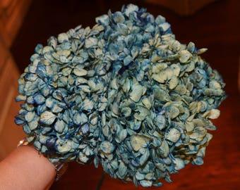 Hydrangeas, Dried hydrangeas, Blue Hydrangeas, Dried arrangements, Wedding arrangements, Large bunch!!