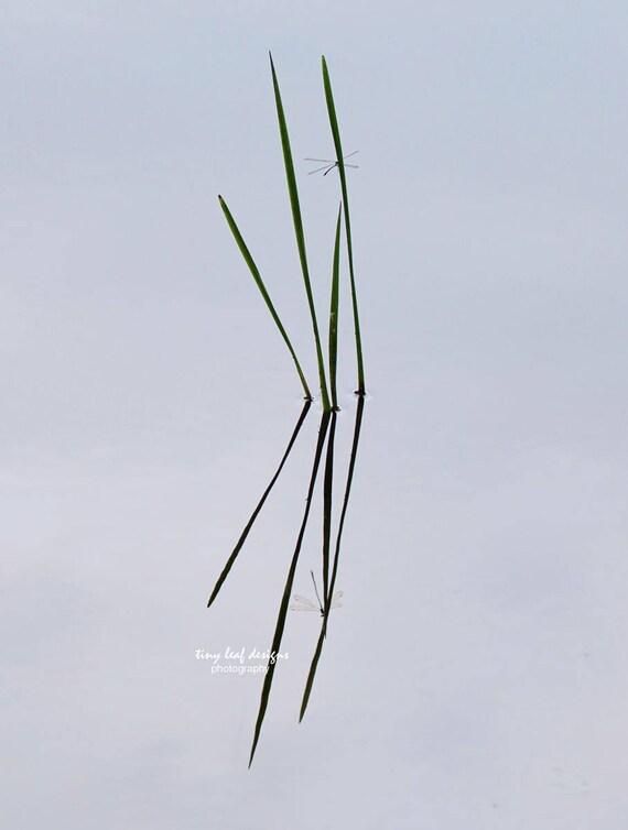 Dragonfly on Grass Original Photograph 5x7 8x10 11x15 Standout 8x10 11x14 12x18 16x24