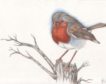 Trio of robins triptych