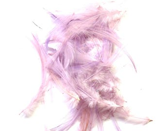 20 DUVETS 10/12 CM PURPLE ROOSTER NECK FEATHERS