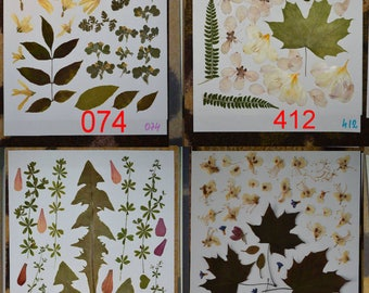 Pressed leaves, pressed petals, pressed plants, oshibana supplies. #074 #412 #035 #003