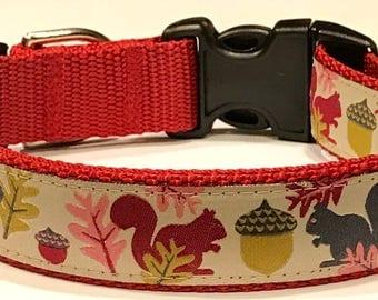 Dog Collar: Squirrels and Acorns Jessica Jones Ribbon Adjustable Dog Collar/Leashes, Pet Supplies, Nature/Rustic Gift, Veterinary Gift