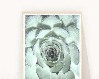Printable Art, Succulent, Succulent Print, Wall Art Prints, Minimalist Print, Instant Download, Home Decor, Wall Decor