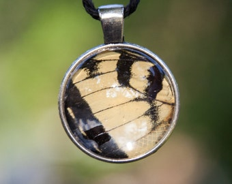 Real Eastern Tiger Swallowtail Wing Necklace