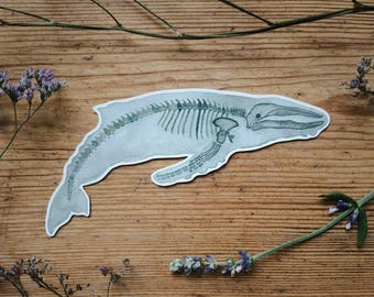 Whale Sticker | Fish Stickers | Planner | Diary | Animal | Laptop | Wall | Anatomy Art | Vinyl | Skeleton | Ocean | Decal | Sea Ichthyology