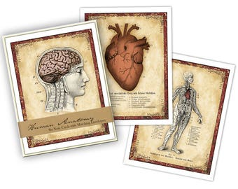 Human Anatomy Boxed Note Card Set