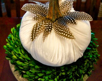 Off White Velvet Pumpkins with Real Pumpkin Stems and Feathers