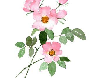 Roses - Original Watercolor Painting