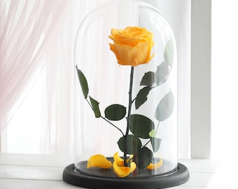 Beauty and the beast rose (Large), Belle Rose, forever yellow rose, Enchanted Rose, rose in glass, preserved rose, five  year rose