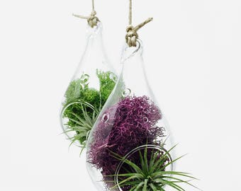 Minimal Hanging Air Plant Terrarium Kit