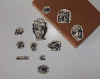Vintage Anatomy sticker flakes