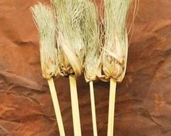 Dried Papyrus Brush Branches | Papyrus Brush |  Dried Decor | Natural Decorations