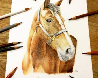 CUSTOM A3 HORSE PORTRAIT - Original coloured pencil drawing -from photograph