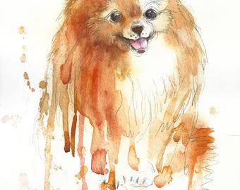 Pomeranian #1