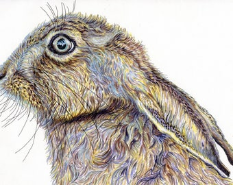 Print of an original pen and ink drawing of a hare (Landscape, sized A4)
