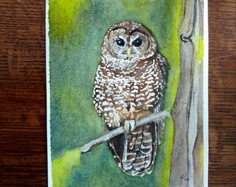 Northern Spotted Owl Print
