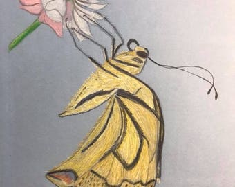 """Color Pencil Drawing """"Butterfly"""""""
