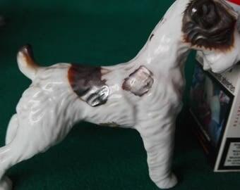 China Terrier Dog