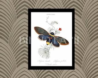 Digital Art - Antique Art - Cicada - Insect Print - Hemiptera - Entomology - Entomologist - Insect Art -  Book Plate - Antique Book Art