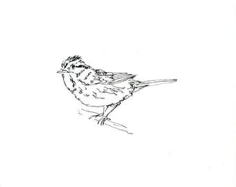 Sketchbook Sale - Bird #7 Original Ink Line Drawing - 8x10 Songbird Original Art