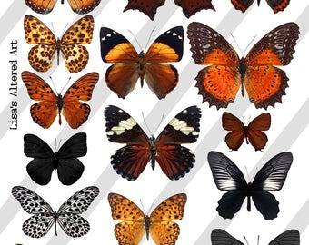 Digital Collage Sheet, Butterflies in Orange and Black, Halloween, (Sheet no. O260) Instant Download, PNG Sheet Included