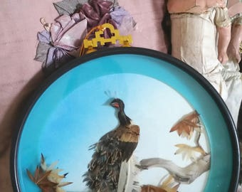 victorian bird feathers, fake taxidermy, vintage bird, real feathers, 3D effect, INCREDIBLE detailing, brocante home