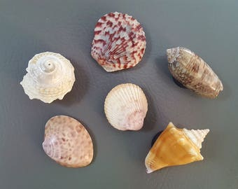 Seashell Magnets, Set of Six, Reminders of Warm Places and Beach Vacations, Kitchen Magnets, Office Decor