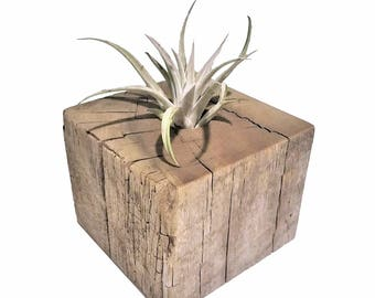 Air Plant Container
