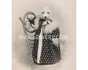 Fox Art Print, 8.5 x 11 Inch Print, Anthropomorphic Animal in Clothes, White Arctic Fox, Victorian Animal, Altered Portrait, Animal Decor