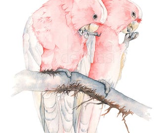 Major Mitchell Cockatoo Print of watercolour painting, A4 size, MMC22617, Cockatoo print, Cockatoo watercolor painting print, Australian art