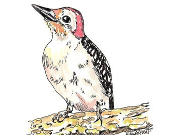 Woodpecker.  Matted Print from the Original Watercolor