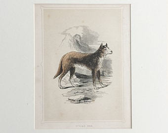 Antique Book plate, Syrian Dog, Canine print, Victorian Natural History, Engraving, Wild animal