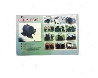 1970 or Earlier Vintage Color Postcard of Black Bear Calendar, Great Smoky Mountains National Park, Tennessee & North Carolina, 6 Cent Stamp