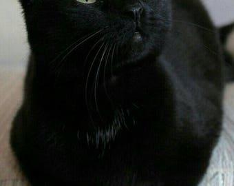 Black cat cross stitch pattern, cross stitch pattern, black cat, counted cross stitch pattern, feline cross stitch, black cat pattern